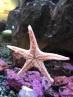 The Seattle Aquarium