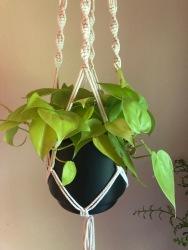 Plant Baby