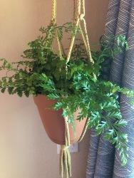 Plant Baby2