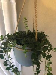 Plant Baby3